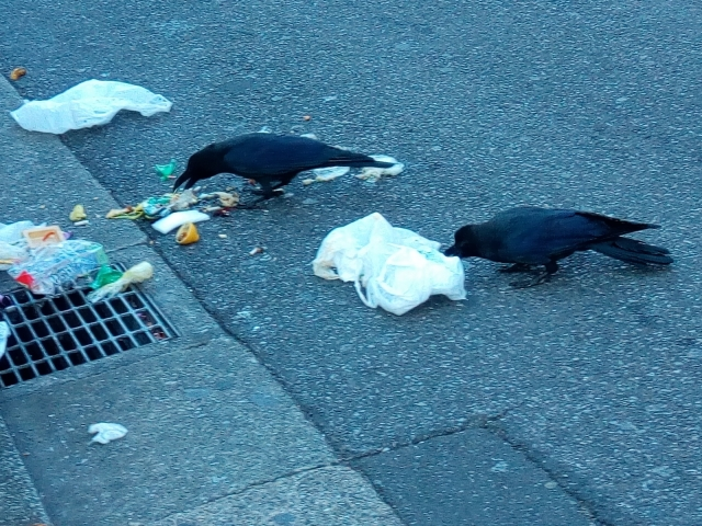 ゴミがカラスの被害に!掃除は誰もしない(怒)住民に協力させるには?
